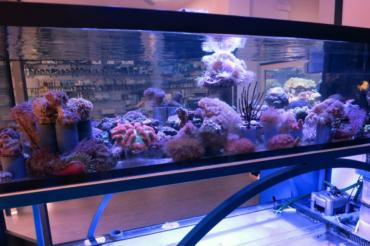 Allestimento di un acquario marino