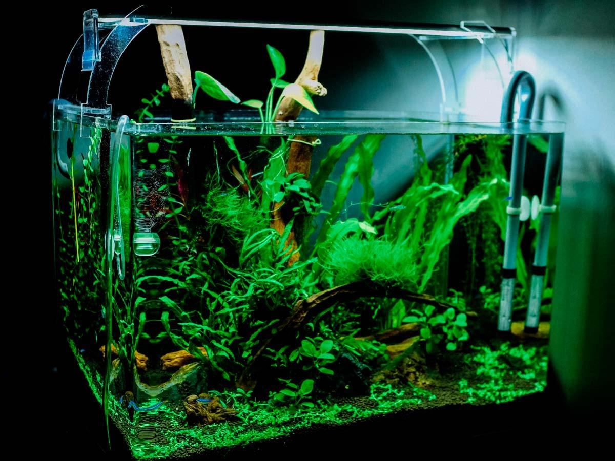 Il ciclo dell'azoto in acquario